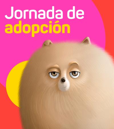 Jornada de adopción - La ceja