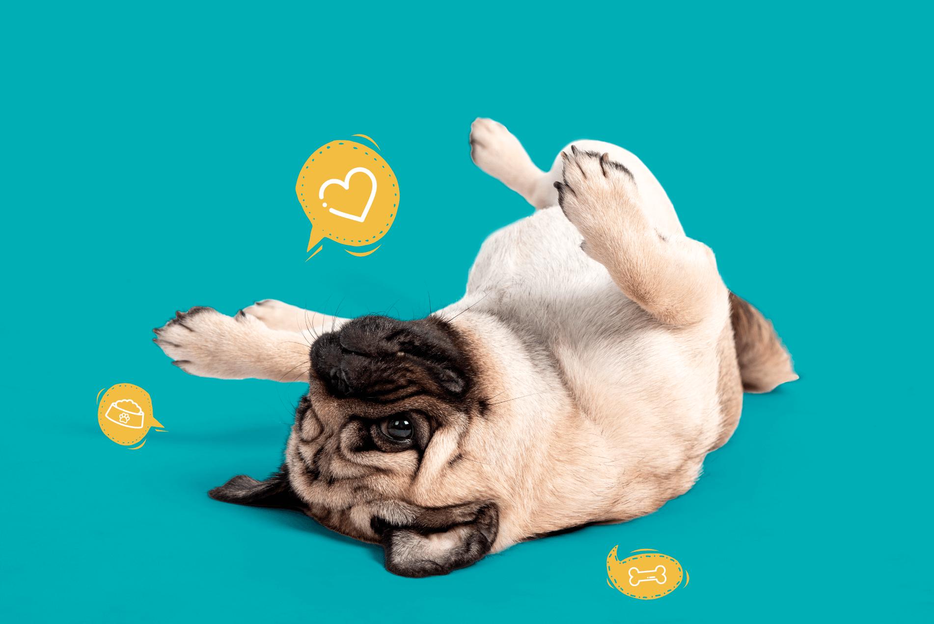 Placita Mascotas - La ceja