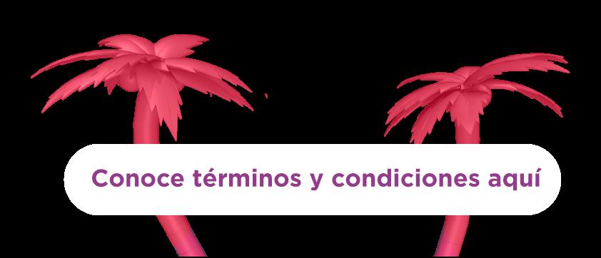 btn-términos y condiciones
