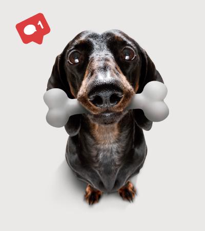 Placita de mascotas - La ceja