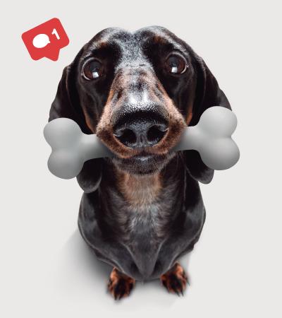 Placita de mascotas - Palmas