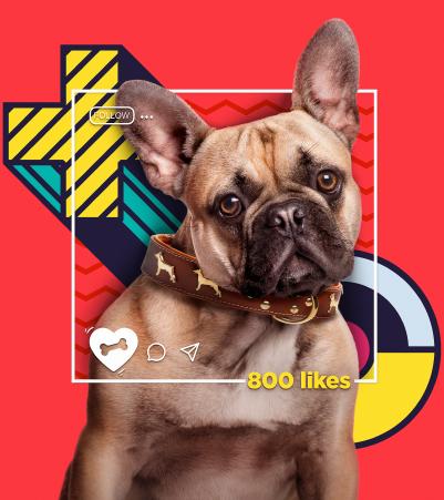 Smile Zone Pets - Barranquilla