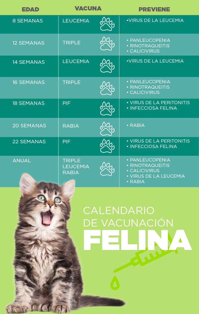 Vacunación felina - Palmas