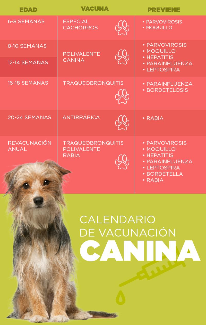 Vacunación canina - Palmas