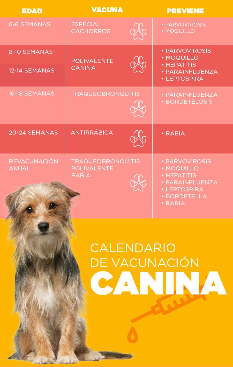 Vacunación canina - Wajiira